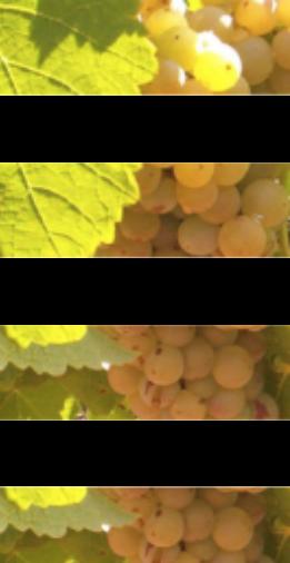 Tècnics Assessoria Agroindustrials