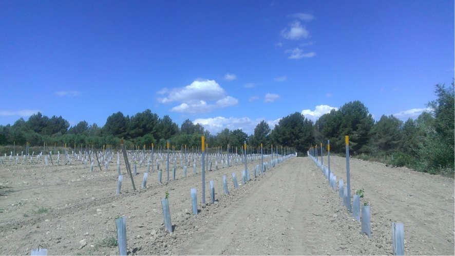 AJUTS PRV (Plans de reestructuració de la vinya)